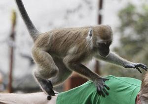 Новости Одессы - животные - эксплуатация животных - В Одессе запретили использовать диких животных для фотосъемки