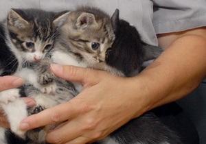 Россиянин Котов осужден за убийство двух котят