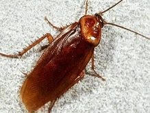 Ученые раскрыли секрет антигравитационных тараканьих трюков