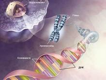 Ученые нашли ген, останавливающий старение