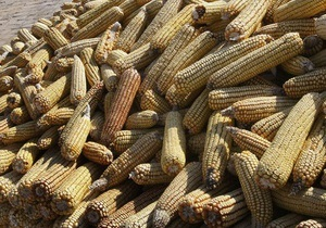 Украина резко сократила экспорт зерна в Иран из-за финансовых санкций ЕС