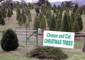 В США неизвестные украли трейлер с рождественскими елками