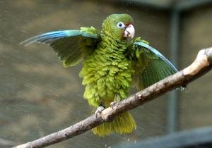 Новости украины: Россиянин пытался вывезти из Украины девять попугаев