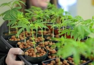 Бывший руководитель Microsoft займется выращиванием марихуаны