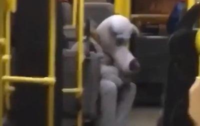 В Киеве в троллейбусе заметили  грустного волка