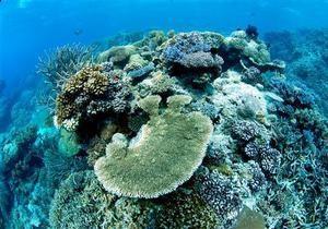 Большой барьерный риф потерял половину кораллов за последние 27 лет