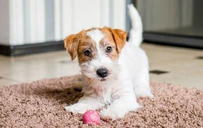 Royal Canin для щенков крупных, средних и мелких пород. Отзывы экспертов
