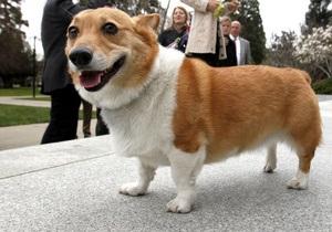 Умерла собака королевы Великобритании