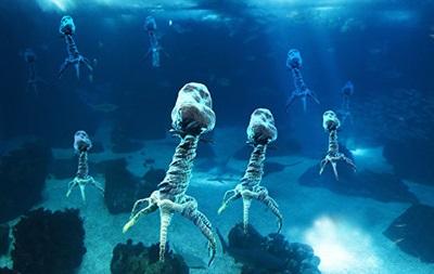 Вчені знайшли 200 тисяч різних груп вірусів у світовому океані