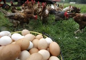 Сегодня отмечается Всемирный день яйца