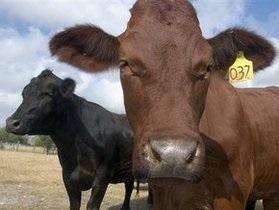 В американском штате Вашингтон обнаружили следы радиации в молоке