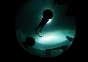 Новости Таиланда: На побережье Таиланда ожидают нашествия ядовитых медуз