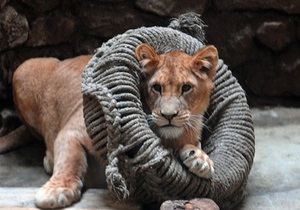 Определился новый руководитель Киевского зоопарка