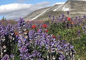 Ученые: альпийские луга находятся под угрозой исчезновения