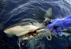 Экологи обеспокоены массовым уничтожением акул в Красном море