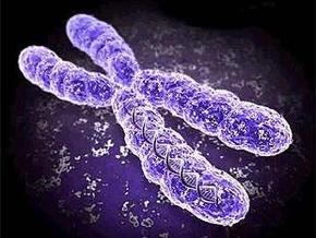 Обнаружены гены, отвечающие за репродуктивные способности у женщин
