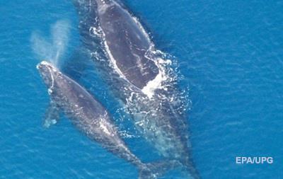Біля берегів Канади знайшли шість загиблих китів