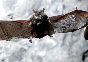 Более трех тысяч жителей Перу подверглись нападению бешеных мышей-вампиров