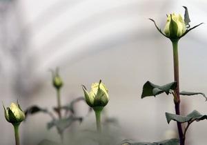 В Киеве высадят полмиллиона кустов роз
