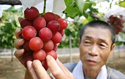 В Японії гроно винограду продали за 11 тисяч доларів