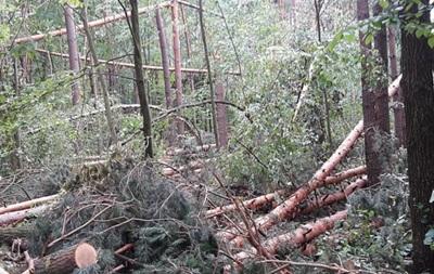 В Черниговской области ураган повалил 160 гектаров леса