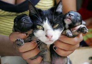 СМИ: В Грузии кошка родила щенка