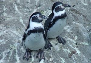 В Киевском зоопарке подтвердили информацию о гибели пингвинов