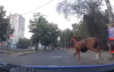 В Одессе патрульные остановили коня на скаку