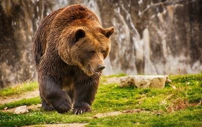 На Камчатці 70 голодних ведмедів заблокували туристичний маршрут