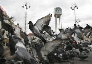 В Испании за кормление голубей введут штраф до 20 тыс. евро