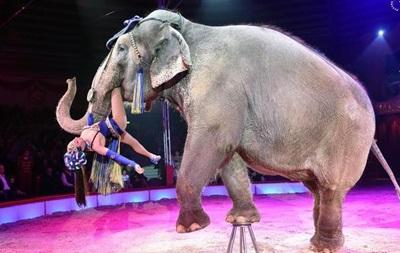 Африканских слонов запретили продавать в зоопарки и цирки