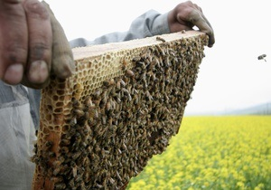 Ученые: Пчелы воспринимают наши лица как  диковинные цветы  и умеют их различать