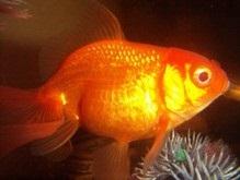 Ученые: Рыбы умеют считать