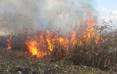 У Полтавській області згоріло 60 га кукурудзи