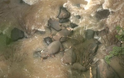 В Таиланде погибли шесть слонов, пытаясь спасти слоненка