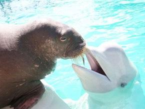 В Киеве впервые состоятся гастроли Ялтинского дельфинария