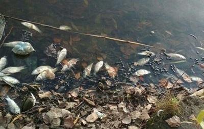 В реке на Житомирщине погибло рыбы на 7 млн гривен
