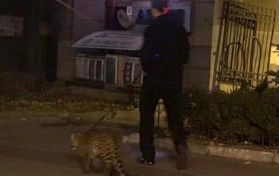 В Киеве заметили мужчину, выгуливавшего леопарда