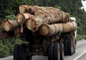 Китай стал главным импортером российского леса