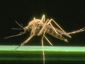 Комар, залетевший в рот ведущей, сорвал выпуск китайских новостей