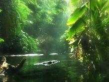 За тропическими лесами будут следить из космоса