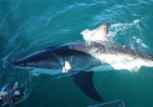 В Египте акула откусила руку российской туристке