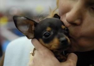Опрос: Треть владельцев собак скучают по ним больше, чем по возлюбленным