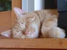 Голландский кот пережил сорокаградусную стирку