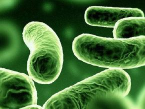 Ученые воскресили древний вид бактерий