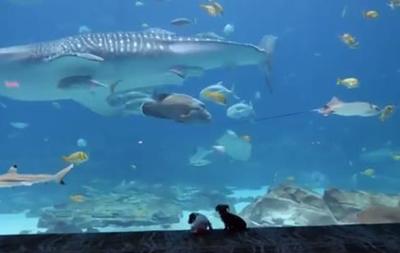 Щенков из приюта пустили погулять в океанариум