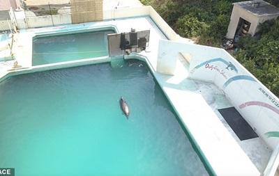 В Японії помер найсамотніший дельфін