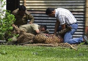 В Индии леопард застрял на заводской ограде