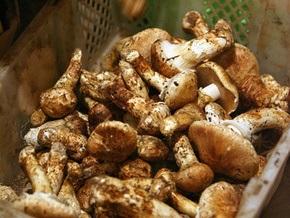 В Херсонской области дети отравились грибами