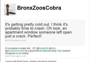 Ставшая звездой Twitter кобра из зоопарка не исчезала. Ее снимали в фильме